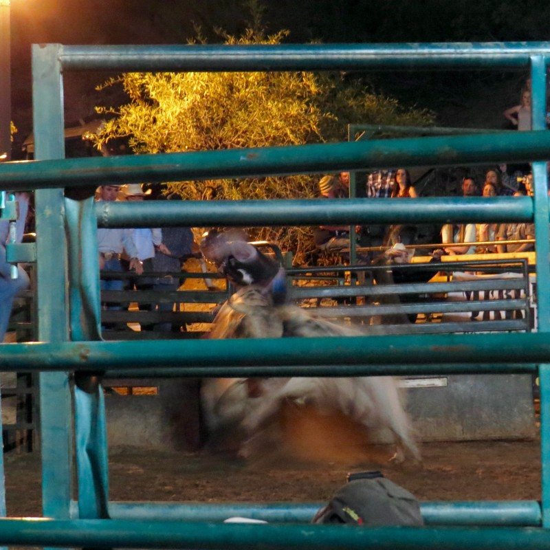 The rodeo cowboy seconds before being thrown from his bull